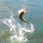 jumpin creature