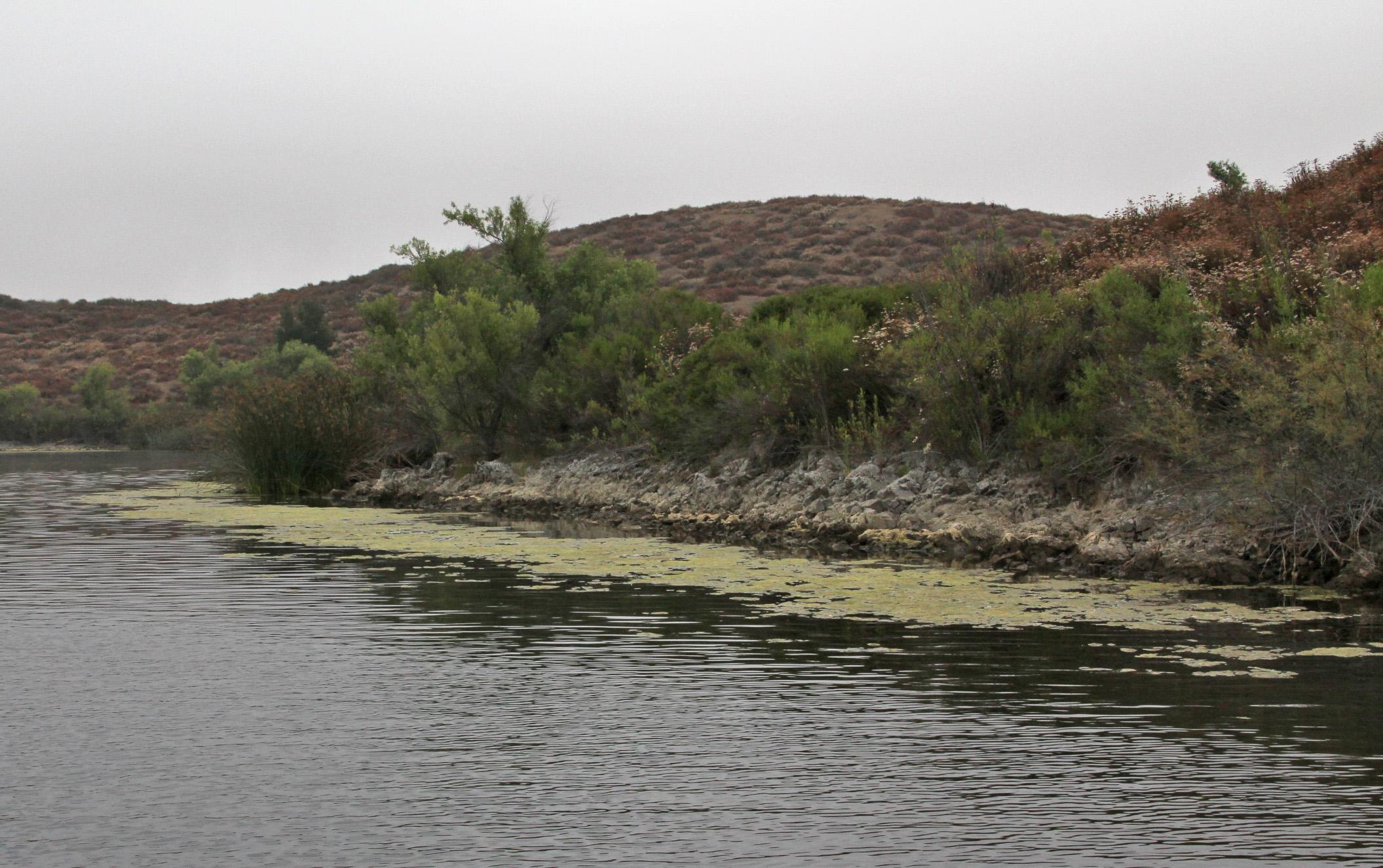Weed growth launch fees up at skinner kramer gone fishing for Lake skinner fishing