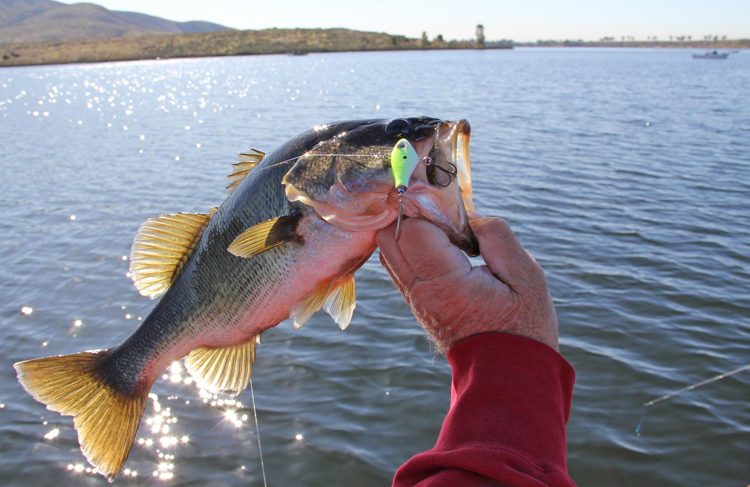 September 2012 kramer gone fishing for Otay lakes fishing